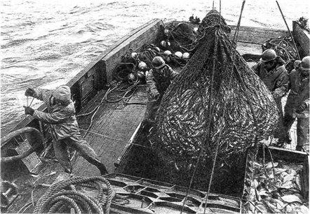 Минтай сегодня — основное богатство камчатских вод