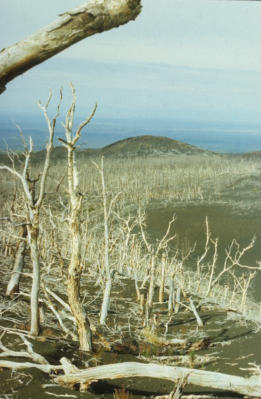 Засохший на корню лес в 5 км к юго-западу от конусов Северного прорыва